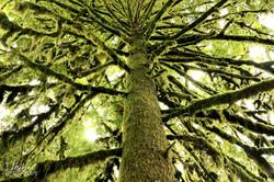 Regenwald in Oregon