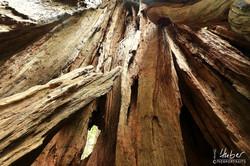Redwood von innen