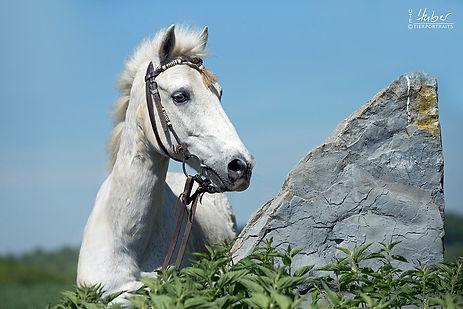 Pferdefotografie Schwäbisch Gmünd