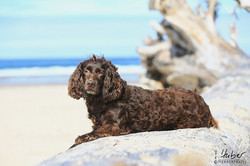 Hund und Meer - tolle Kombination