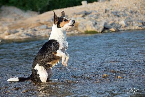 Hundefotografie Schwäbisch Gmünd