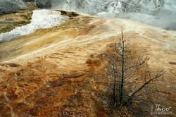 Yellowstone - da kommt der Name her