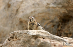 nettes Streifenhörnchen