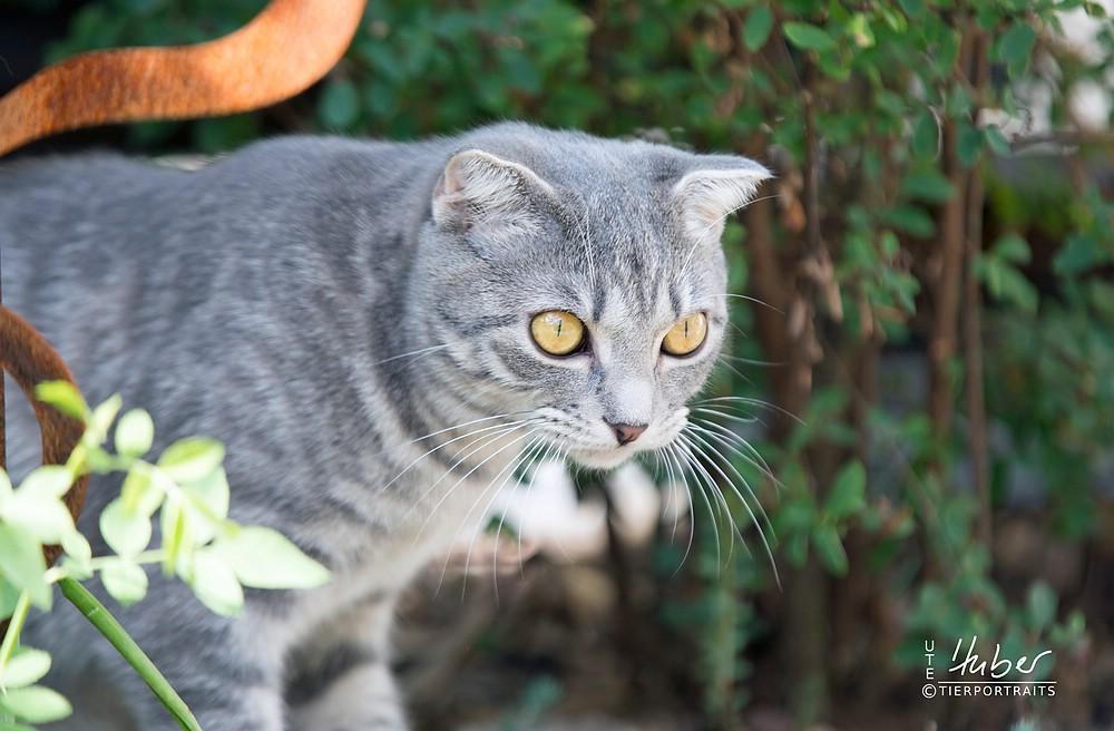 Katzenfotografie Ute Huber