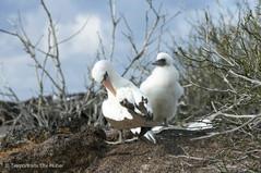c_2018_03_21_Ecuador-Galapagos_5371_1.jpg