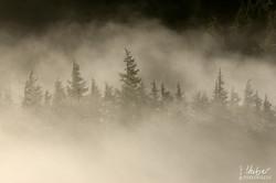 Nebel-Sonne-Stimmung