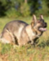 c_L2018_09_29_Schutzhunde Miedelsbach_19