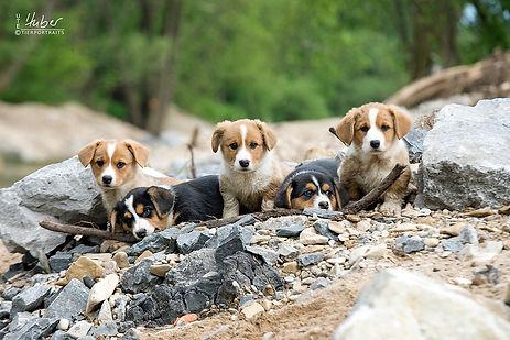 Hundefotografie Welpen Stuttgart