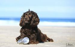 Zufallsbegegnung am Strand