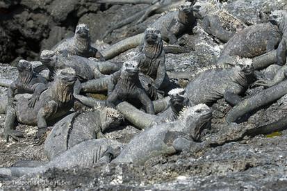 c_2018_03_24_Ecuador-Galapagos_7059_1.jpg