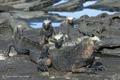 c_2018_03_22_Ecuador-Galapagos_5908_1.jpg