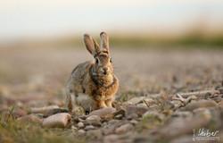 zutrauliches Kaninchen