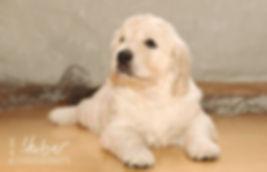Hundefotografie Aalen