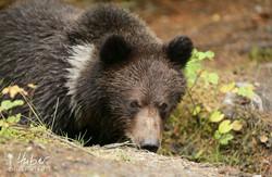 Bärennachwuchs