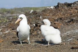 c_2018_03_21_Ecuador-Galapagos_5414_1.jpg