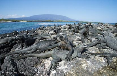 c_2018_03_24_Ecuador-Galapagos_7067_1.jpg