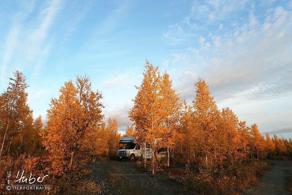 Campsite am Arctic Circle