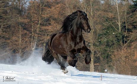 Pferdefotografie Tierfotografie Stuttgart