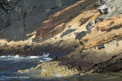 c_2018_03_23_Ecuador-Galapagos_6427_1.jpg