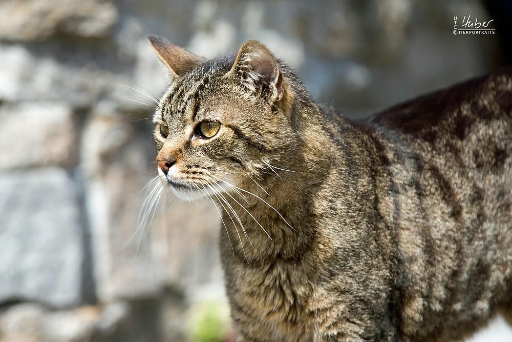 Katzenfotografie Rems Murr Kreis