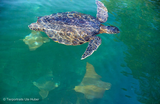 c_2018_03_25_Ecuador-Galapagos_7501_1.jpg