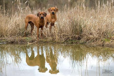 Tierfotografie Aalen