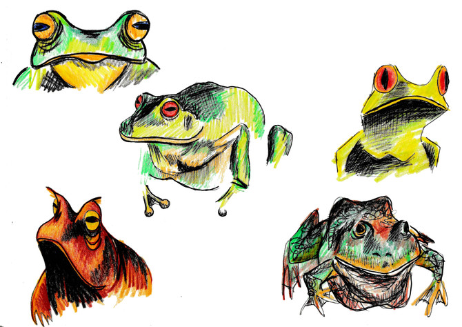 drawing frogs