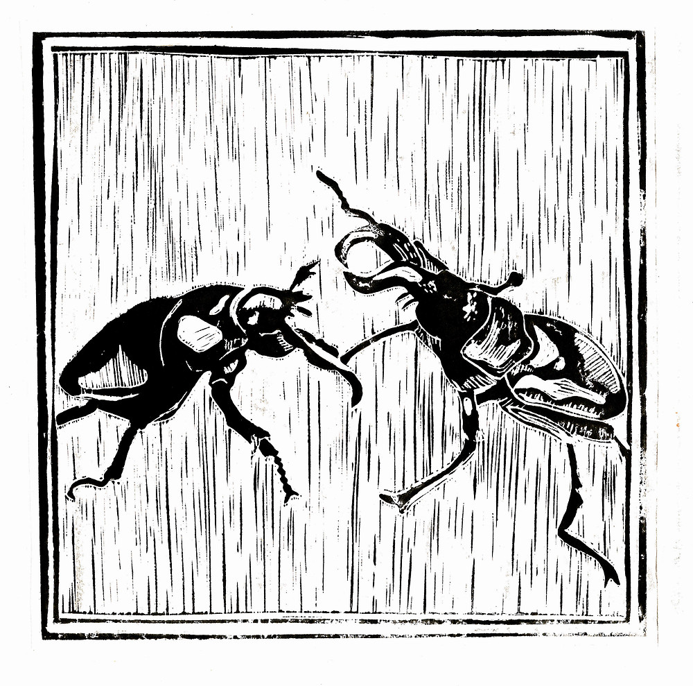 stag beetles lino cut
