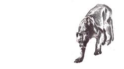 Cougar stalk