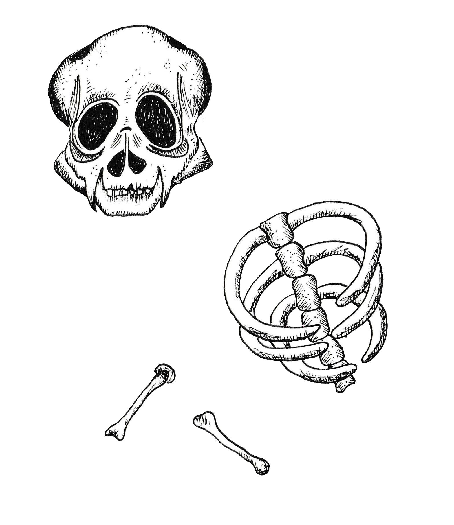 bones.psd