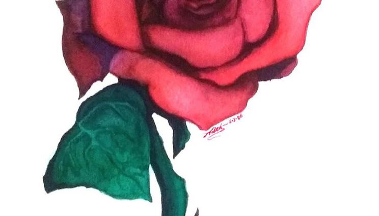 A Rose is Still