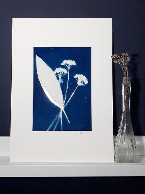 Wild Garlic Flower Cyanotype on fabric