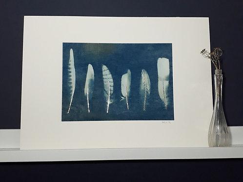 Wild Bird Feather Cyanotype on fabric