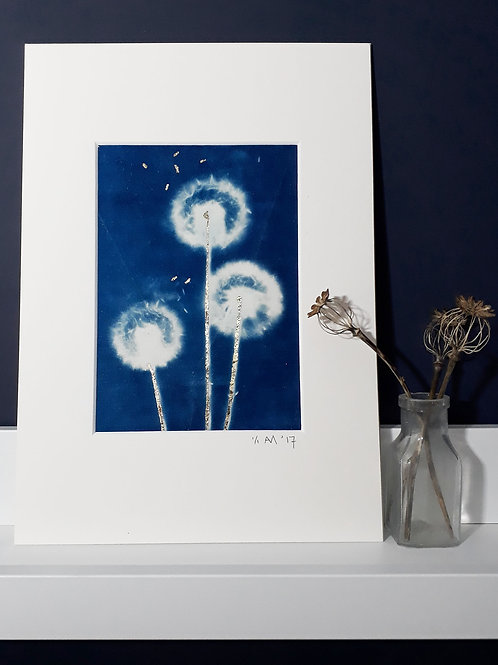 Dandelion Cyanotype on fabric