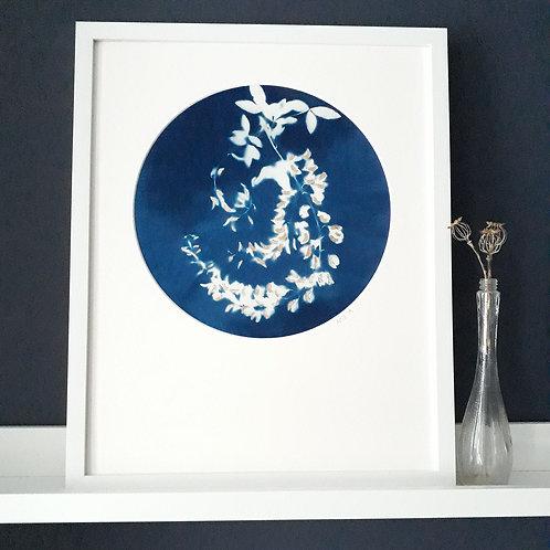 Laburnum Cyanotype on Fabric