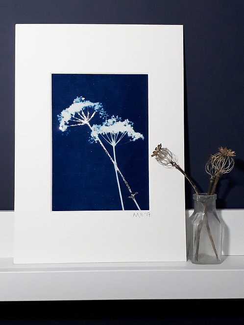 Cowparsley Cyanotype on fabric