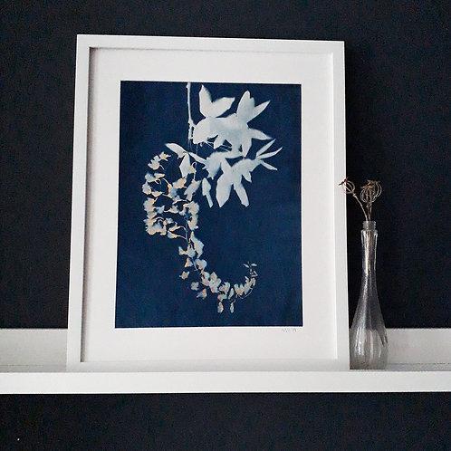 Laburnum flower head Cyanotype