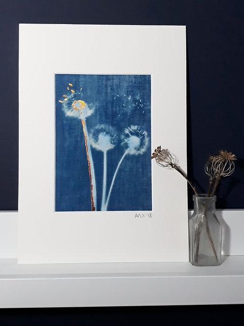 Dandelion Cyanotype on fabric