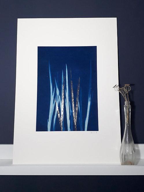 Grasses Cyanotype on fabric