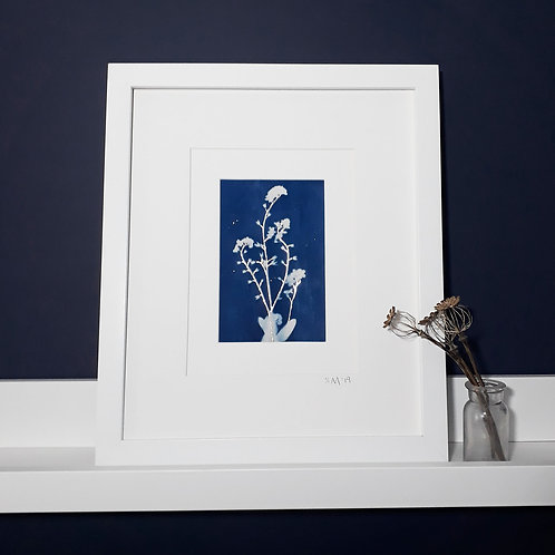 Forget Me Not Framed Cyanotype print on Fabric