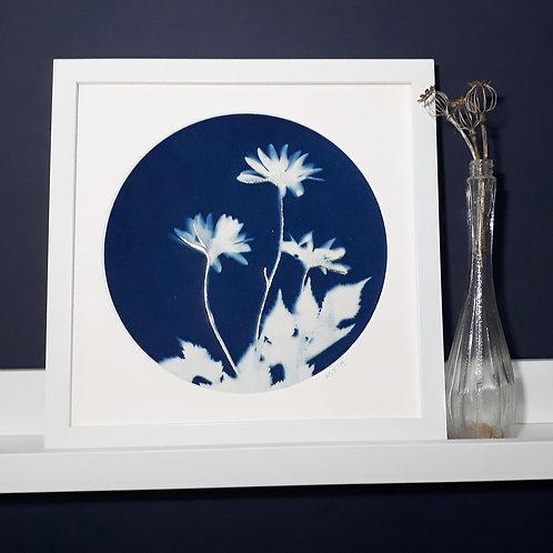 Daisy Cyanotype on Fabric
