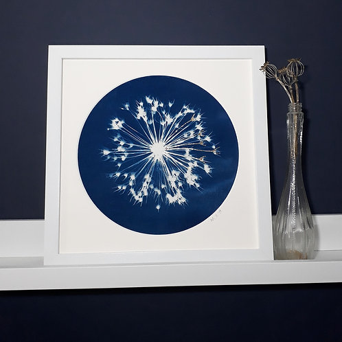 Allium Seedhead Cyanotype on fabric
