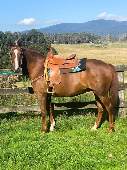 MEGS - Stock Horse x Mare