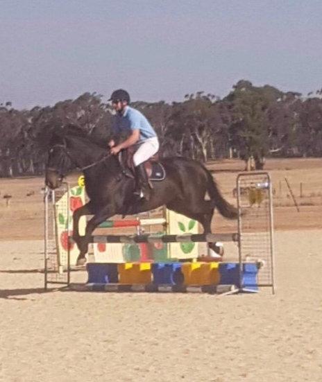 CHOC - Warmblood x Stock Horse Gelding