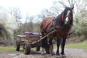 A brown horse harnessed to a cart in a r