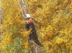 Orchard drainage