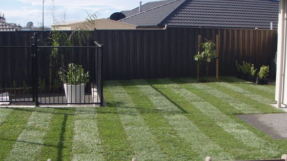 Care for ready lawn after installation