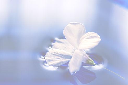 flowers-1167669_edited_edited_edited.jpg