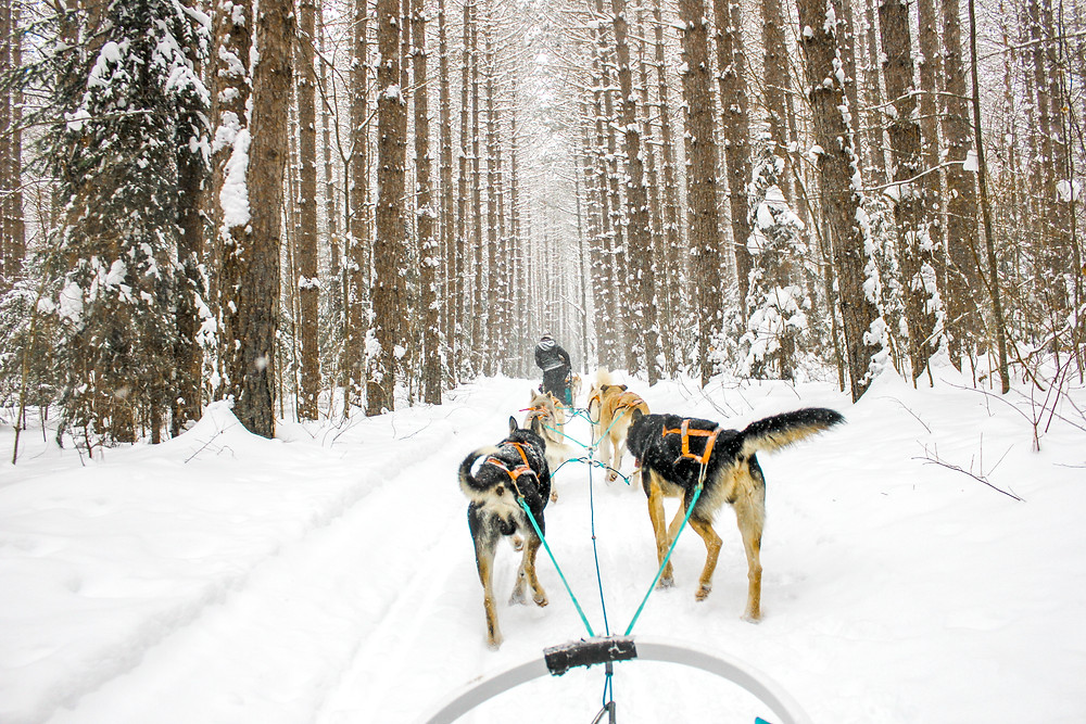 Dog sledding ontario