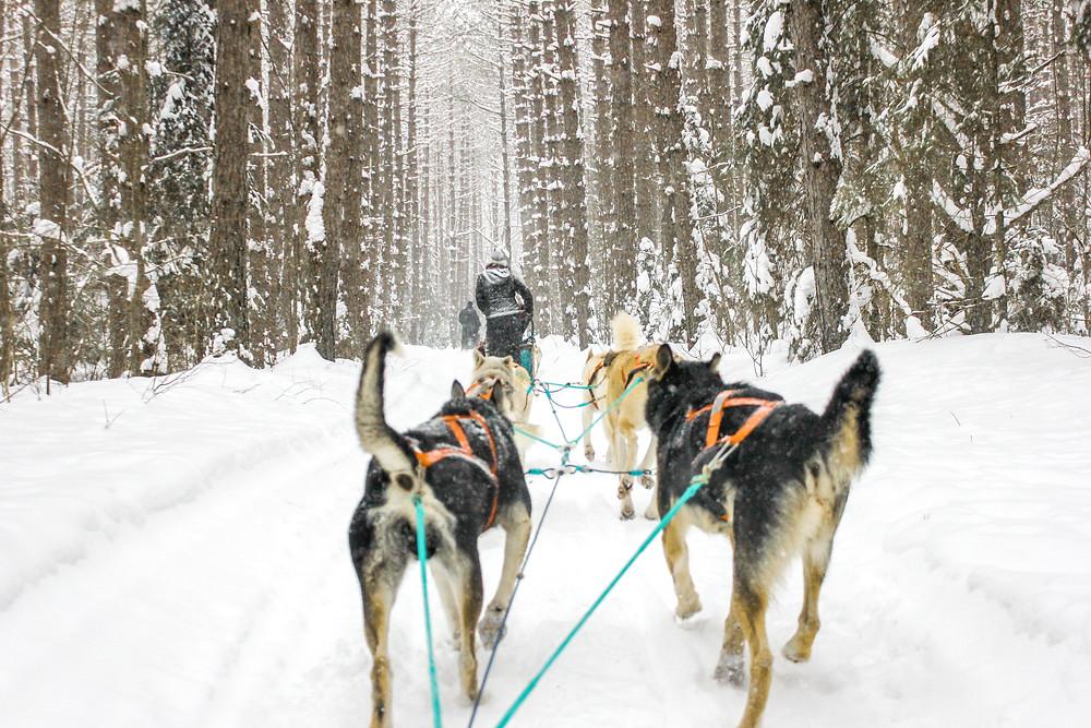 Dog sledding huntsville